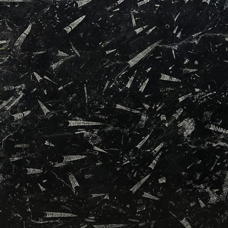 Fossil Black Polished Marble Slab Random 3 4