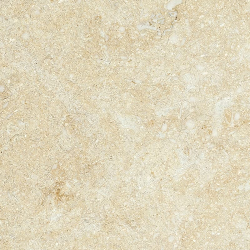Seashell Honed Limestone Tiles 4x4 Marble System Inc