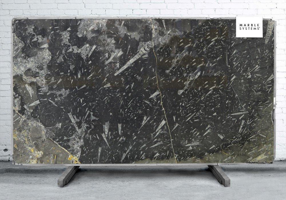Fossil Black Polished Marble Slab Random 3 4